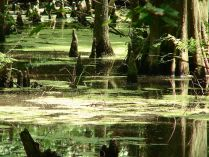 Swamps_6129035996